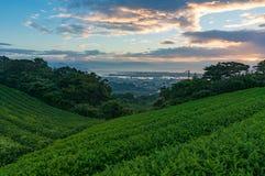 Sonnenaufgang auf Plantage des grünen Tees mit Stadtansicht Stockbilder