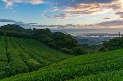 Sonnenaufgang auf Plantage des grünen Tees mit Stadtansicht Lizenzfreie Stockfotografie