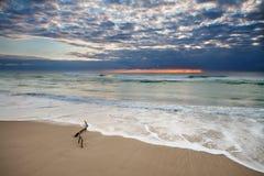 Sonnenaufgang auf Strand mit Zweig im Vordergrund Lizenzfreie Stockbilder