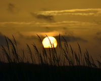 Sonnenaufgang auf Sullivans-Insel Lizenzfreies Stockfoto