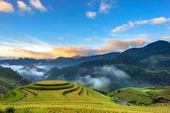 Sonnenaufgang auf terassenförmig angelegtem Reispaddy Stockfotos
