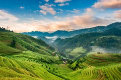Sonnenaufgang auf terassenförmig angelegten Reisfeldern Stockfoto