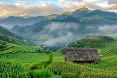 Sonnenaufgang auf terassenförmig angelegten Reisfeldern Stockbilder