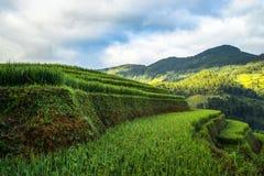 Sonnenaufgang auf terassenförmig angelegten Reisfeldern Lizenzfreie Stockbilder