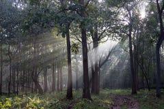 Sonnenaufgang auf Waldweg Stockfotos