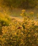 Sonnenaufgang-Basisrecheneinheit Stockfotos