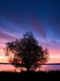 Sonnenaufgang-Baum Stockbild