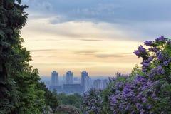 Sonnenaufgang in botanischem Garten Kiews Stockfoto