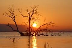 Sonnenaufgang in dem Salton Meer Lizenzfreies Stockfoto