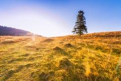 Sonnenaufgang in den Bergen - Baum, der allein auf der Wiese unter einem blauen Himmel steht Lizenzfreie Stockbilder