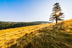 Sonnenaufgang in den Bergen - Baum, der allein auf der Wiese unter einem blauen Himmel steht Stockfoto