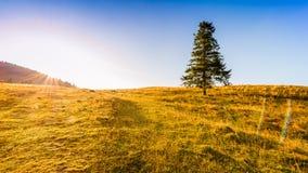 Sonnenaufgang in den Bergen - Baum, der allein auf der Wiese unter einem blauen Himmel steht Lizenzfreies Stockfoto