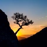 Sonnenaufgang in den Bergen mit Baumschattenbild und -meer Lizenzfreie Stockfotos
