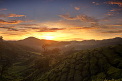 Sonnenaufgang an den Cameron-Hochländern Stockbilder