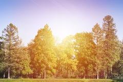 Sonnenaufgang in den HerbstBäumen des Waldes stockbild