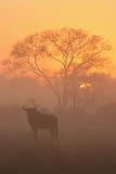 Sonnenaufgang in den Sabi Sanden lizenzfreie stockfotos