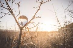 Sonnenaufgang, der in einer Glaskugel in einem Baum sich reflektiert lizenzfreie stockbilder