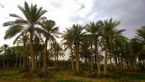 Sonnenaufgang in der irakischen Landschaft Lizenzfreie Stockfotografie