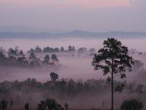 Sonnenaufgang in der Landschaft mit Nebel an Thung Salaeng Luang nationalem PA Stockbild