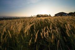 Sonnenaufgang in der Rasenfläche lizenzfreie stockfotos