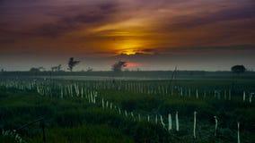 Sonnenaufgang, der sich zurück von der Wolke mit Vogel- und Reisfeld versteckt Stockbild
