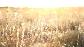 Sonnenaufgang in der Steppe stock footage