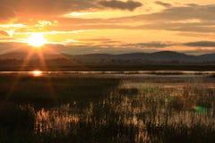 Sonnenaufgang der Wiese Stockfotos