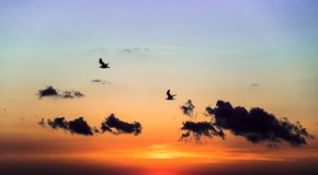 Sonnenaufgang des frühen Morgens über dem Meer und Vögel stockfotos