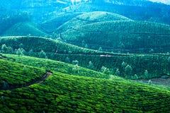 Sonnenaufgang des frühen Morgens mit Nebel an der Teeplantage Lizenzfreie Stockfotografie