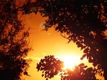 Sonnenaufgang durch Bäume Stockfotos