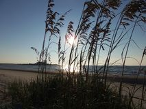 Sonnenaufgang durch das Seegras Stockfoto