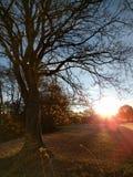 Sonnenaufgang durch die Bäume Lizenzfreie Stockbilder