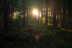 Sonnenaufgang durch die Bäume in diesem Wald Lizenzfreie Stockfotografie