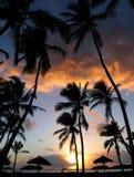 Sonnenaufgang durch die Palmen lizenzfreie stockfotos