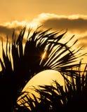Sonnenaufgang durch die Palmen II Stockfotografie