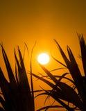 Sonnenaufgang durch die Palmen III Stockbild