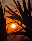 Sonnenaufgang durch die Palmen XIX Lizenzfreies Stockbild