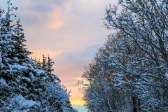 Sonnenaufgang durch Schnee bedeckte Bäume Lizenzfreies Stockbild