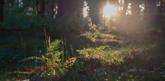 Sonnenaufgang in einem frischen Wald Lizenzfreie Stockfotografie