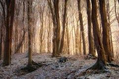 Sonnenaufgang in einem gefrorenen Wald im Winter Lizenzfreie Stockfotos