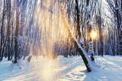 Sonnenaufgang in einem schneebedeckten Park Lizenzfreies Stockbild