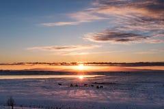 Sonnenaufgang gestaltete mit Schattenbildpferd am Winter in der Landschaft, Süd-Island landschaftlich Stockbild