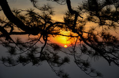Sonnenaufgang hinter Baum Lizenzfreies Stockfoto