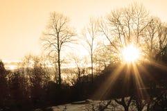 Sonnenaufgang hinter dem Baum, Wintermorgen stockbild