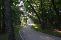 Sonnenaufgang hinter den Bäumen Stockfotografie
