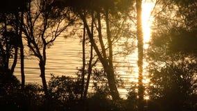 Sonnenaufgang-Hintergrund 3 stock video