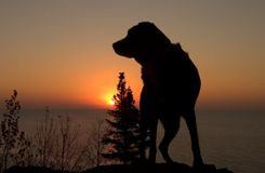 Sonnenaufgang-Hund Stockfoto