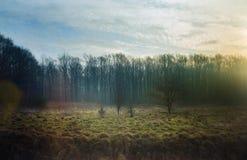 Sonnenaufgang im alten Wald mit Sonnenstrahl Lizenzfreie Stockbilder