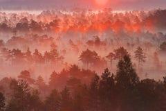 Sonnenaufgang im estnischen Sumpf Lizenzfreies Stockbild