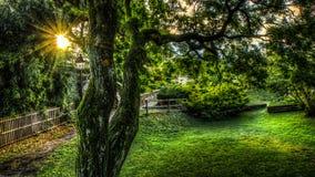 Sonnenaufgang im Garten Stockfotos